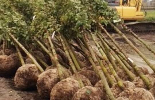 bomen_planten
