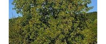 Plant een aantal notenbomen in de spoorkuil - D5BD11B0-9033-4DBA-8FCB-ED9A3DECE0C4