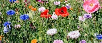 Maak de Meijhorst kleurrijker en gezond voor bij en mens! - veldmengsel