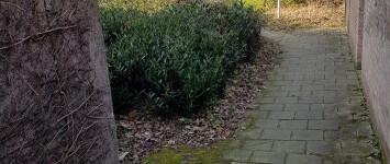 Afsluiten en beplanten met groen - 20190217_155158
