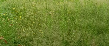 Beplanting - IMG-20190625-WA0001