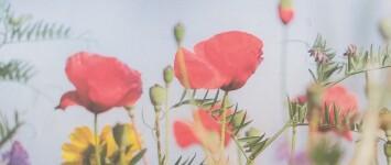 Maak plaats voor wilde bloemen - Wilde_bloemen_(2)