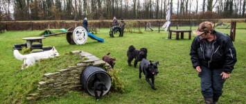 Honden speelcircuit in losloopgebied Spoorkuil - download
