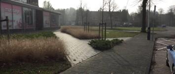 Bewonerswens vergroenen van stenig pleintje - IMG_0398