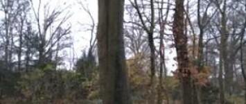 Johannieterhof buurttuin groenonderhoud  - 1