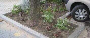 Okapistraat groenonderhoud - Okapistraat