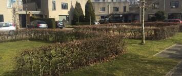 Moeder Teresahof groenstrook - 03-2018.3