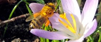 Biologische bollen voor de vlinderlint-route Stadspark Groene Perron - 065b2395-6157-4d42-b2d9-8b919498defd
