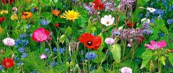 Wilde bloemen langs Frankrijkstraat in Lent - 1432b85f02fd271d22a3eb79f35dece3