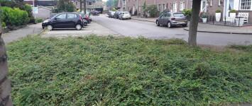 Herinrichting plantsoen Wedesteinbroek 11e straat en plaatsen minibieb - 15922871227044688532074112419066