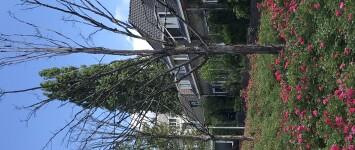 vervangen dode bomen Lorkenstraat - 29A30DA0-488E-4854-BB45-8F547E4C0FE3