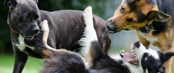 Hondenspeeltuin bij de Kamp/aan de Westkanaaldijk - border-collie-672696_1920