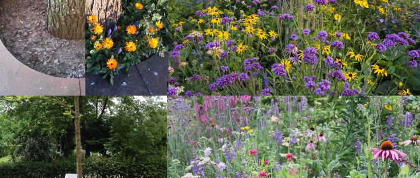 voorbeeld_bloemen_planten