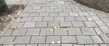 Wortelopdruk verwijderen Broerweg - Esdoornplein en gedeeltelijk opnieuw bestraten trottoir en parkeerplaatsen  - broerweg-esdoornplein_3