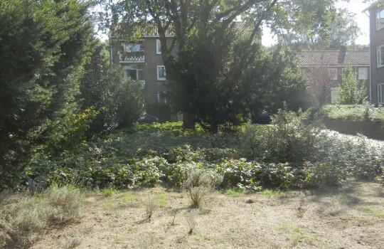 Vogelkersstraat_-_plantsoen_(3)